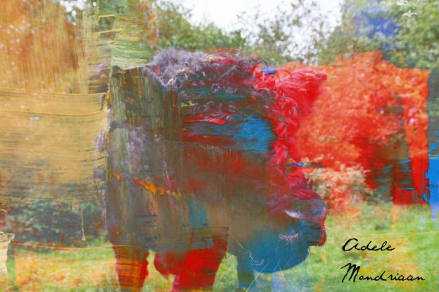 galloway koe