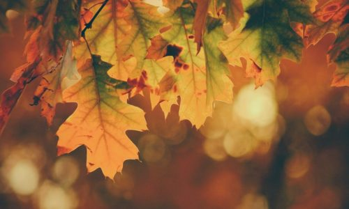 Herfst is here: Time to update your Dutch vocabulary!